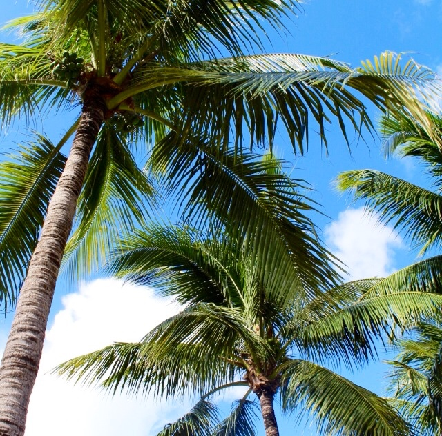 Bahamas_Travel_Julispiration_11